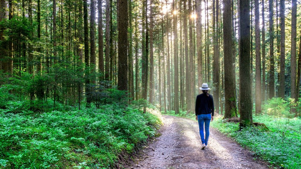 Forest Bathing is Natural Therapy for Your Health