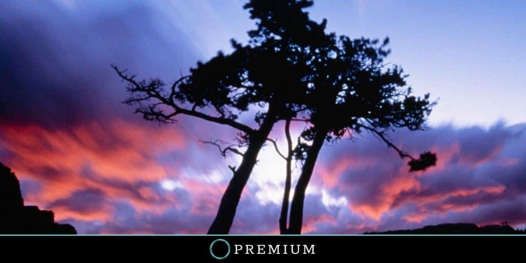 Sloww Awareness by Anthony de Mello Premium Post