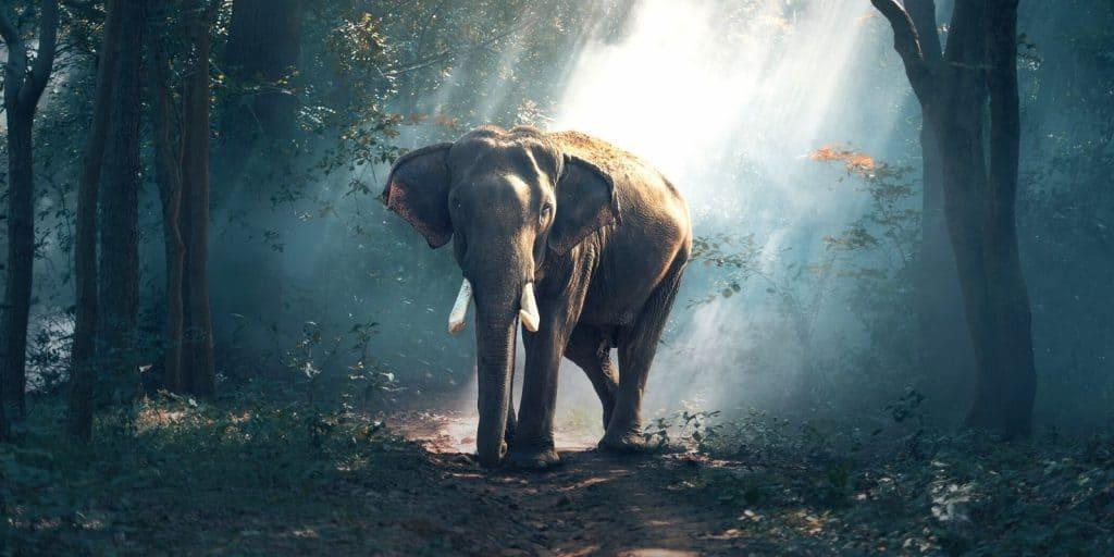 Sloww Blind Men Elephant Story