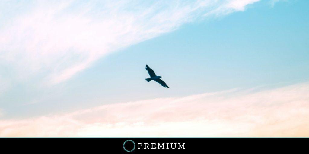 Sloww Yes to Life Viktor Frankl Premium